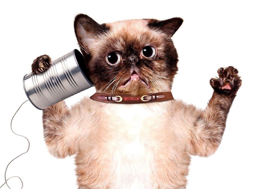 Katzen sind ein exzellentes Gesprächsthema