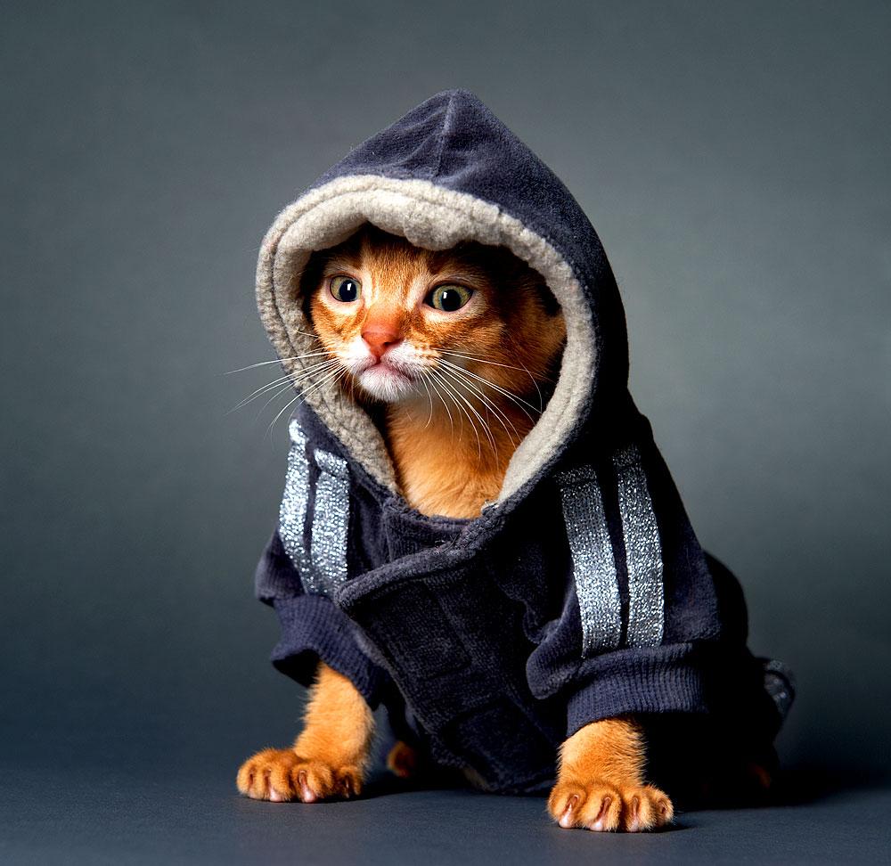 Katzen sind die Helden im Internet