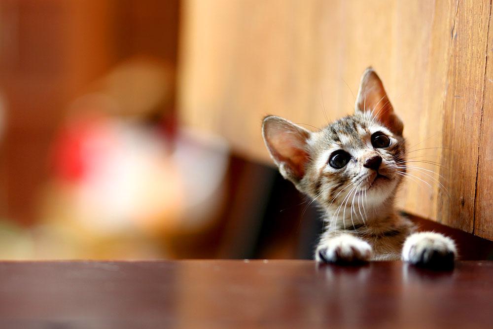 Im Tierheim gibt es Topkatzen