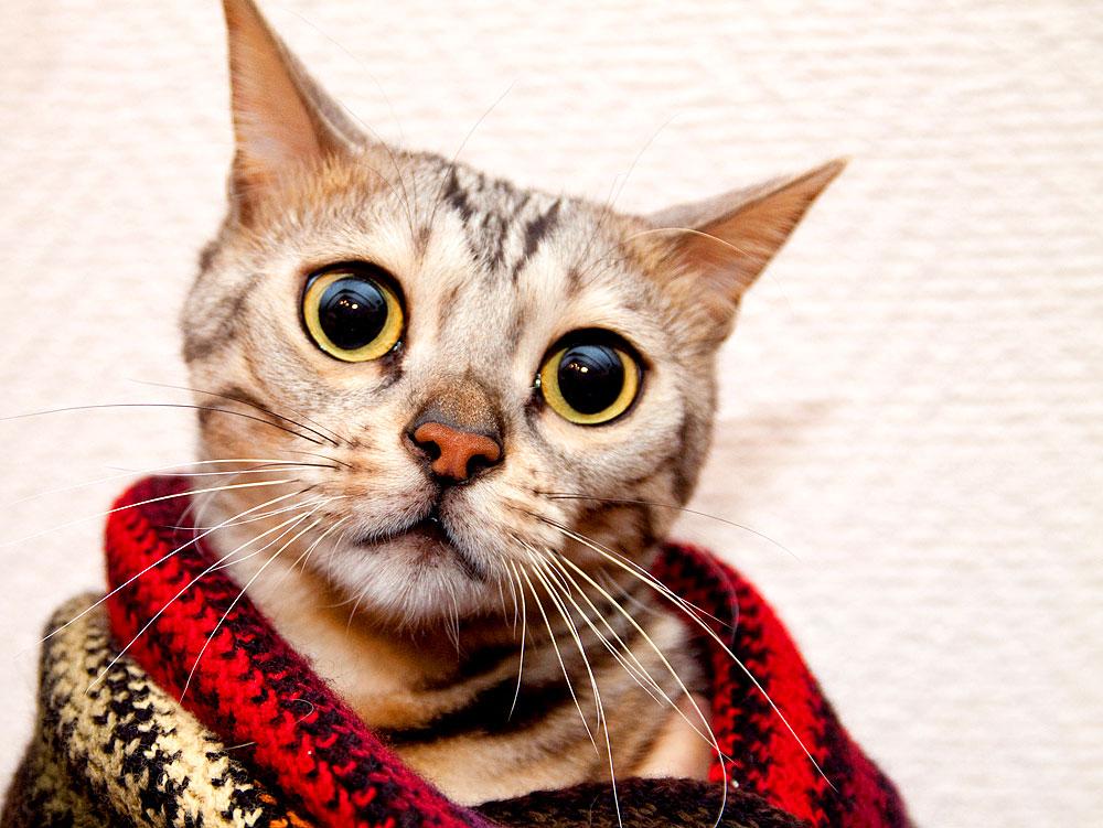 Katzen sind mitfühlend und erstklassige Tröster