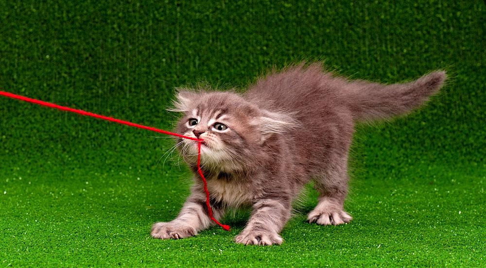 Es gibt tausend Gründe, sich für eine Katze zu entscheiden